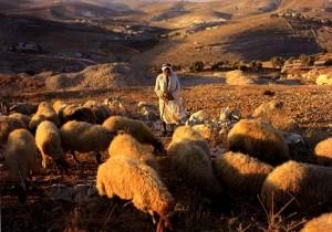 feeding the flock of God